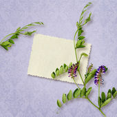 Card for invitation or congratulation with sweet pea flower — Stock Photo