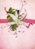 Pink card with lace and lily — Stock Photo