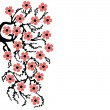 Branch Sakura - Stock Vector