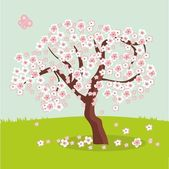 Sakura tree background — Stock Photo