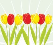 Tulip background — Stock Photo