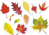 Set of isolated autumn leaves — Stock Vector