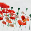Painted watercolor poppies — Stock Photo