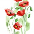 Painted watercolor poppies — ストック写真