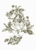 Freehand drawing rose — Stock Photo