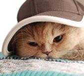 Close-up cat wears a hat — Stock Photo