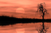 Reflected riparian tree in golden sunset — Stock Photo