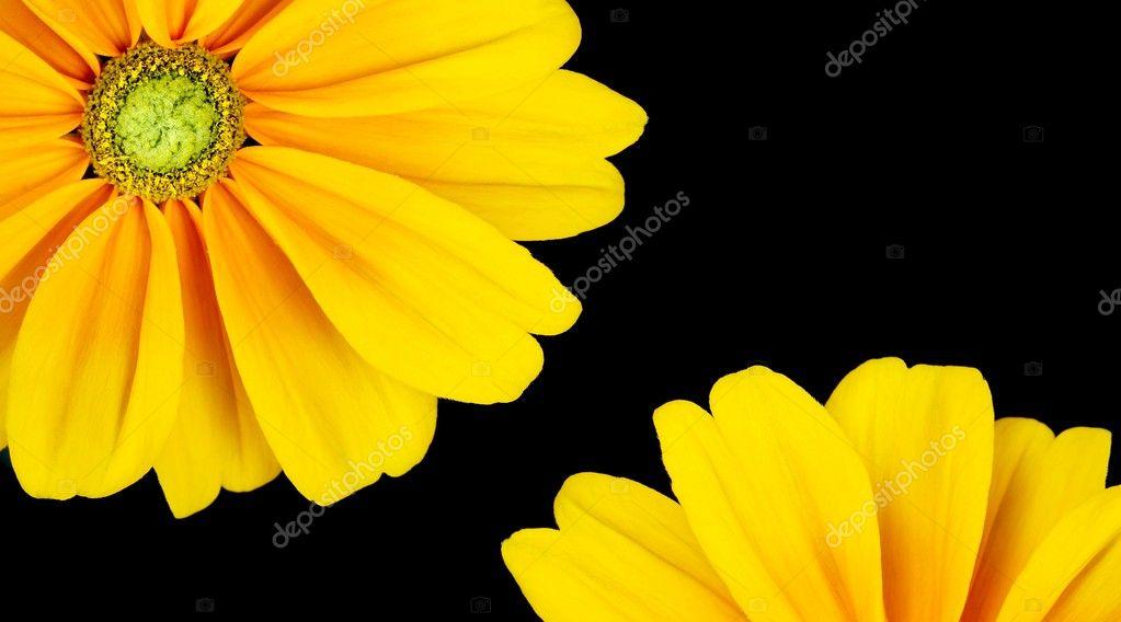 Sunflower Frame Sunflower Frame on Black