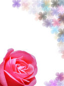 Rose and lucky leaf background — Stock Photo