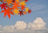 Abstract oak leaf against cloudy sky — Stock Photo
