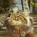 Attentive cat — Stock Photo