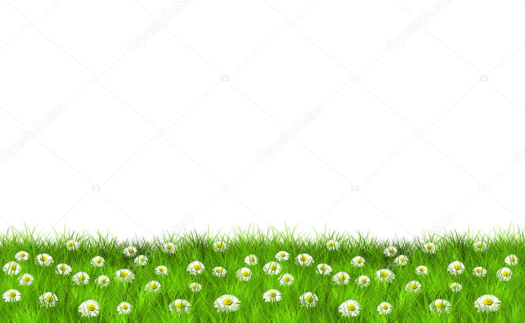 Grass and Daisies Motive — Stock Photo #4650461