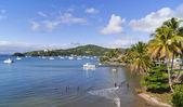 Foresta tropicale. Samana. Repubblica Dominicana — Foto Stock