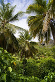 Tropical forest. Samana. Dominican republic — Stock Photo