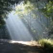 Stockfoto: Sunbeams