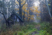 Small house in a foggy forest — Stock Photo