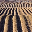 Farming Rows seeds plalnted - Foto de Stock