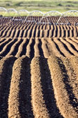 Farming Rows seeds plalnted — Stock Photo