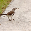 Bird on Sarasota sidewalk — Stock Photo