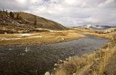 Yellowstone park wyoming invierno nieve — Foto de Stock