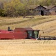 Stock Photo: Combining near old granaries SasktchewCanada