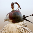 Gyrfalcon with hood falconer close — Stock Photo