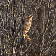 Cat in a tree Winter Canada — Stock Photo