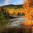 Autumn colors along Tanzilla River in Northern British Columbia — Stock Photo