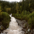 Stock Photo: Argle Creek in British Columbia