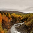 Stock Photo: Creek in Northern British Columbia