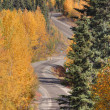 Autumn colored trees along mountain road in British Columbia — Stock Photo