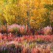 Autumn colored trees and plants along road in British Columbia - Stock Photo