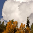 Stock Photo: Cumulonimbus cloud over British Columbiforest