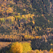 Colorful trees during British Columbia autumn — Stock Photo