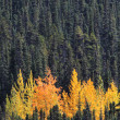 Colorful forest in British Columbia — Stock Photo #4859577