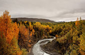 Creek in Northern British Columbia — Stock Photo