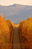 Autumn colored trees along road in British Columbia — Stock Photo