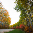 Autumn trees in Meadow Lake Park Saskatchewan — Stock Photo