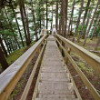 Wooden stairs at Kitsumkalum Provincial Park — Stock Photo
