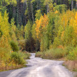 Aspen trees in autumn along mountain road — Stock Photo