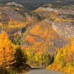 Autumn colored Aspens along British Columbia road — Stock Photo