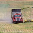 Harvesting fodder in Saskatchewan — Stock Photo