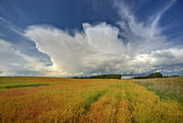 Scenic Saskatchewan countryside — Stock Photo