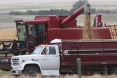 Saskatchewan-erntezeit — Stockfoto