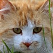 Domesticate cat outdoors - Stock Photo