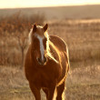 Stock Photo: Horse in pasture