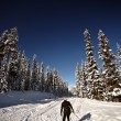 Cross country skier enjoying the winter - Stock Photo