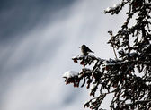 Unknown bird in tree in winter — Stock Photo