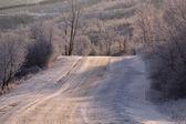 バッファローに道冬の湖をポンドします。 — ストック写真