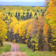 Gravel road bordered by Aspen trees in fall — Stock Photo #5208401